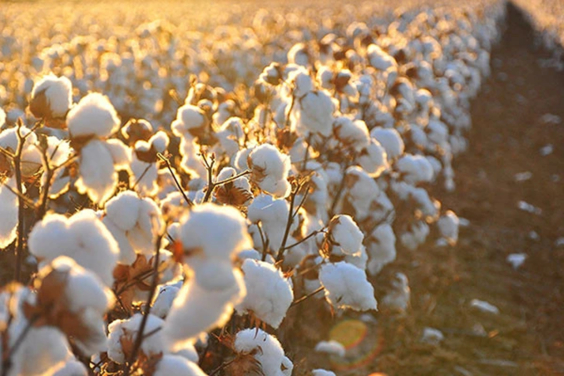 How Organic Cotton Clothing Can Help Eczema